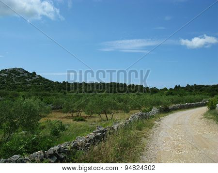 An unsealed road at the Croatian countryside