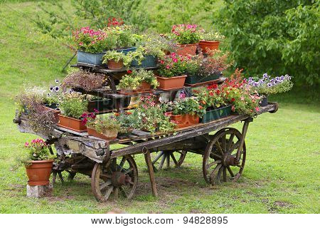 Rural Scene With Flowers In Pots During Flowering