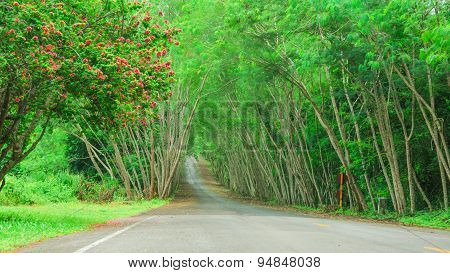 Beautiful Road And Tree Tunel As Background Texture