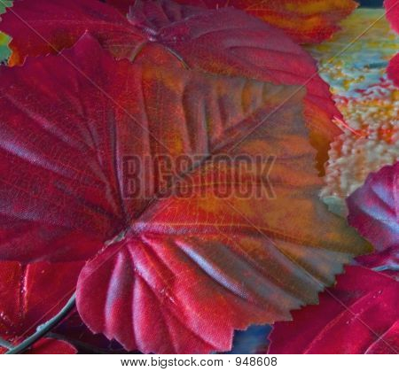Colorful Fall Leaf