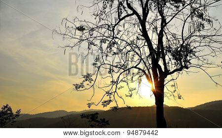 Backlit trees branches and sunset sky on evening time