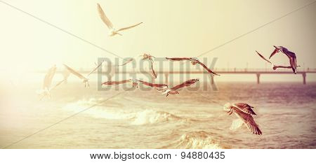 Vintage Retro Stylized Photo Of A Seagulls, Old Film Effect.