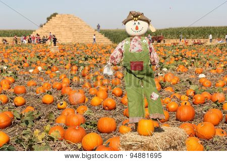 Scarecrow in autumn pumpkin field