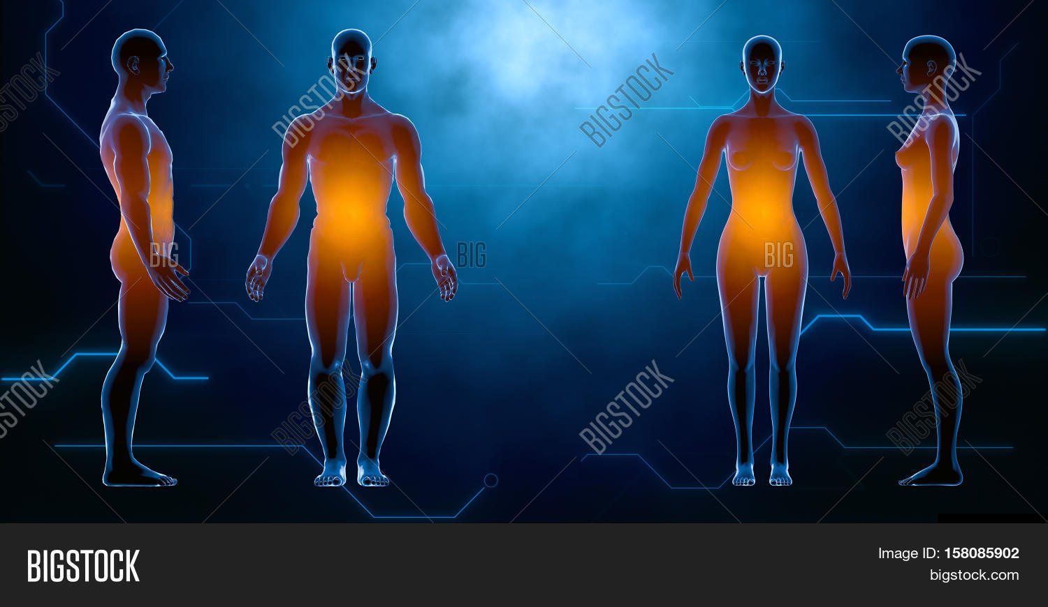 X Ray Human Male Image Photo Free Trial Bigstock