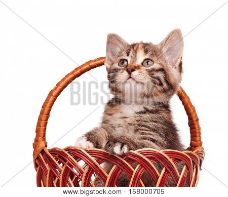 Cute little kitten in a wicker basket isolated on white background. Playful beautiful young cat. Portrait of domestic funny kitty.