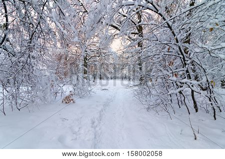 Beautiful christmas winter evening landscape in a park