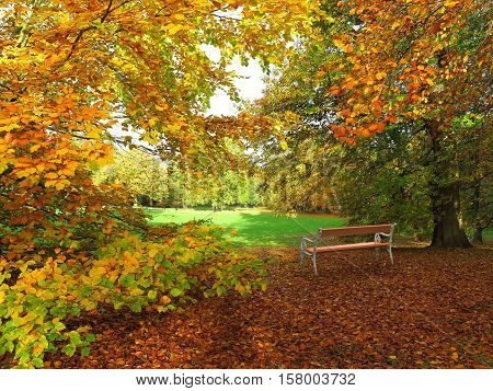 park in autumn with beech foliage and bench