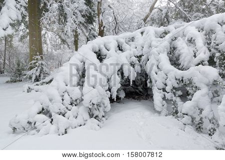 Winter scene in the park after heavy snowfall