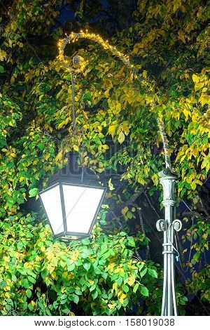 Glowing streetlight on the background of foliage of tree in the night