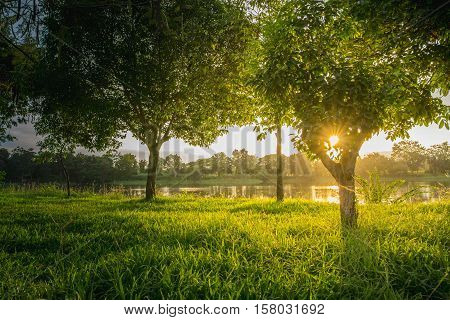 Trees near lake and green grass where light shines
