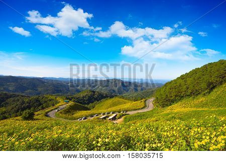 The road to the field of yellow Mexican Sunflower Weed on the mountainMae Hong Son ProvinceThailand. pang ung pinging Chiang Mai pai flower