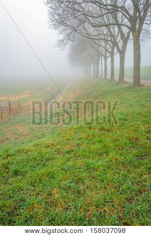 Dutch rural landscape with dewy grass in the foreground and a row of trees in the background on a misty morning in the end of the winter season.