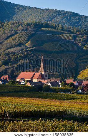 Niedermorschwih, Alsatian Vineyards, Alsace, France, Europe, Autumn