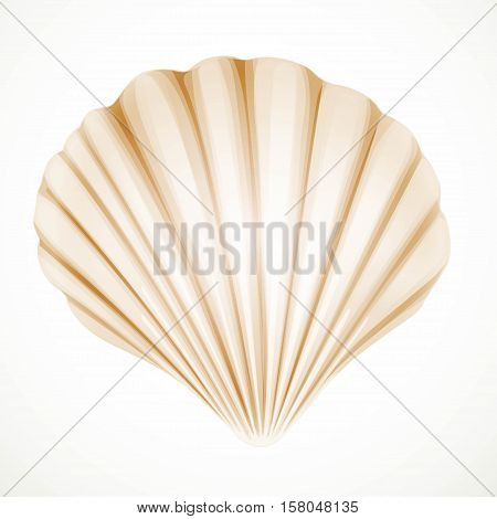Realistic  Beige Gabled Seashell Isolated On White Background