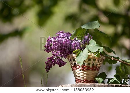 Lilac Flowers In A Wicker Basket, Standing On A Tree Stump