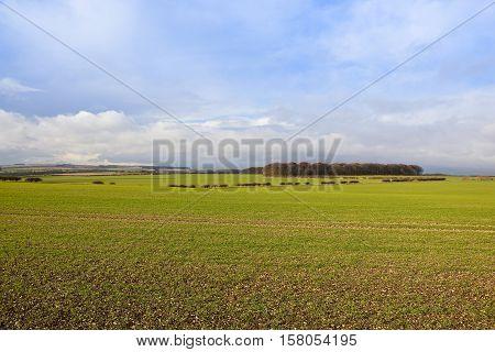 Autumn Woodland And Wheat