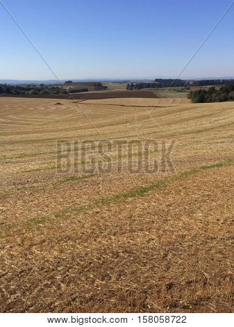 A hayfield in the fall after a season of harvest.