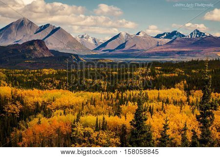 Autumn colors in Denali NP, Alaska, USA