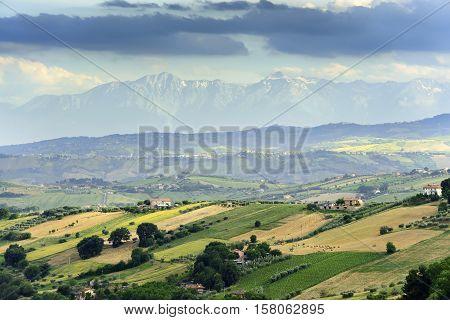 Typical Landscape Near Offida