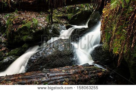 Small Waterfall in the Rain Forest, Color Image