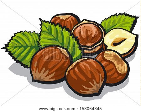 illustration of group cracked hazelnuts with leaves