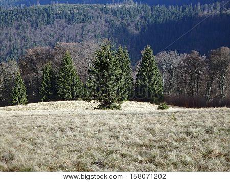 Autumn on alpine meadows , alpine meadow , Velka Fatra , Slovakia