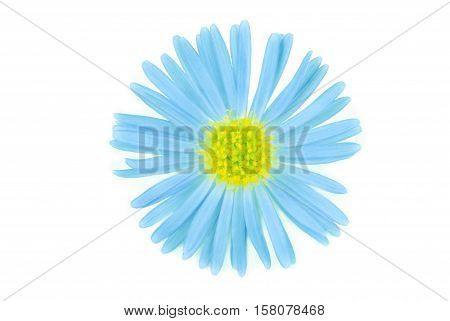 close up of the flower isolated on white