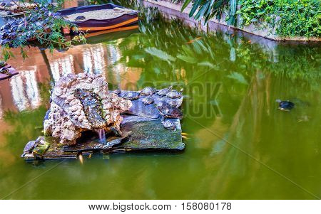 Green water turtles in an artificial pond at the Atocha station of Madrid, Spain