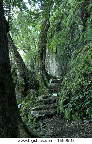 steps and a path through the oxley world heritage rainforest poster