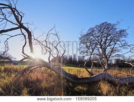 Landscape Of Craigmillar