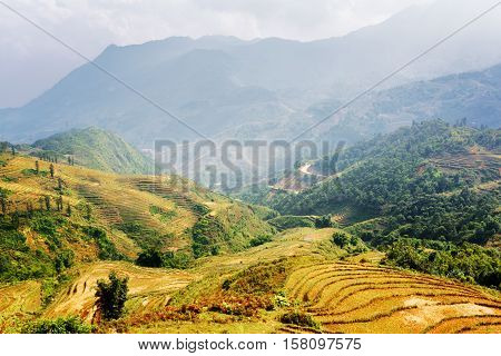 Terraced Rice Fields At Highlands Of Sa Pa, Vietnam