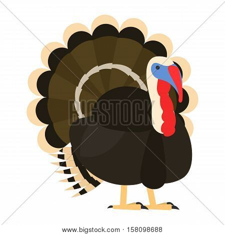 flat bird isolated on white background, beautiful vector illustration turkey, meleagris gallopavo