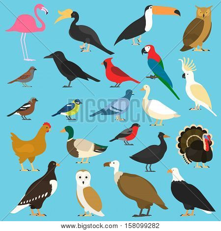Set of birds, isolated on background. different tropical and domestic birds, cartoon style simple birds for logos, turkey. chicken. duck. parrots . eagles. raven. owls. toco toucan. dove red cardinal sparrow
