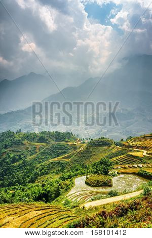 Sunlit Rice Terraces At Highlands. Sa Pa District, Vietnam
