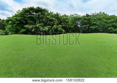 green lawn and tree in the garden with cloud and blue sky
