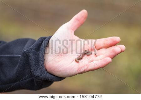 Man Hand With Earthworm.