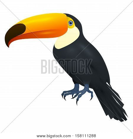Toucan, Isolated On White Background, Vector Illustration
