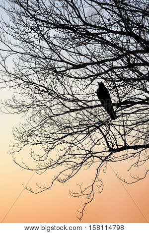 silhouette of crow perch on tree branches with sunshine