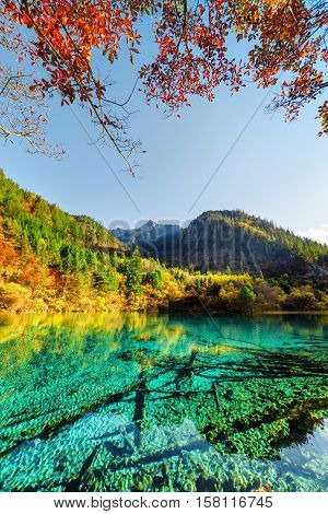 Fantastic View Of The Five Flower Lake Among Colorful Fall Woods