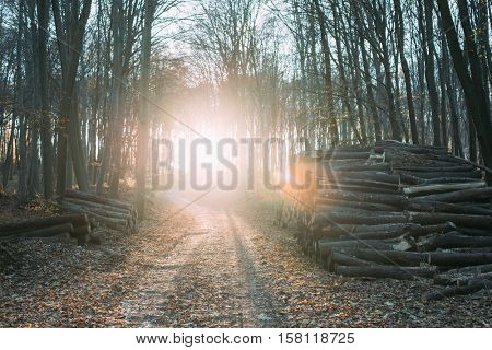 Sunset in forest, forest path and wood