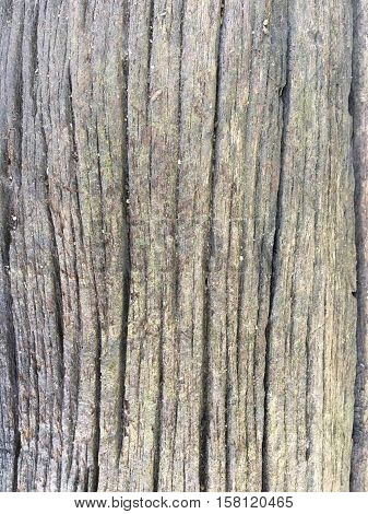 Texture old wood background Texture old wood background