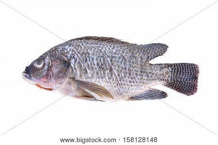 Gutted scaled and sliced Nile Tilapia fish on white background
