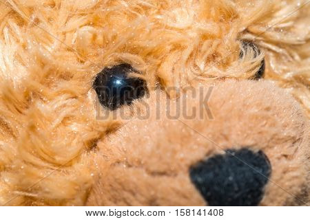 Close Up Of Toy Eye
