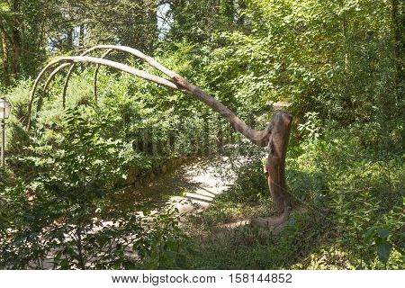 Abstract tree in the park - bent over the footpath