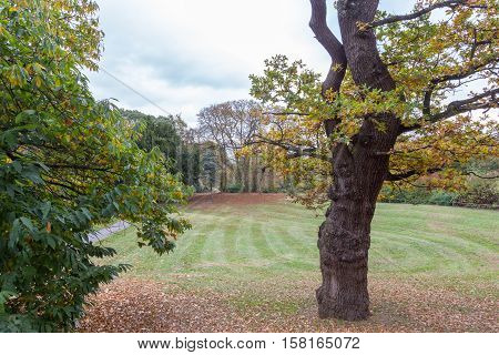 Autumn trees around the newly cut grass, with leaves fallen on the ground.