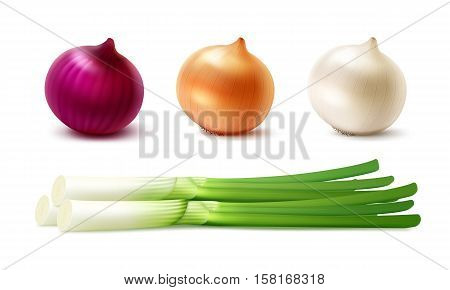 Vector Set of Fresh Whole Yellow Red White Green Onion Bulbs Close up Isolated on White Background