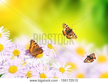 Butterflies flying over flowers on sunny background of green color