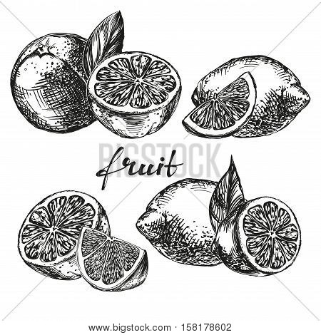 fruit orange, lemon and lime set hand drawn vector llustration realistic sketch