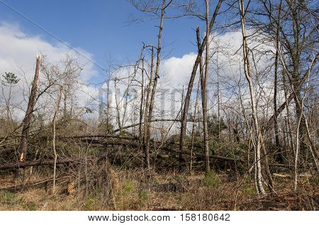 Storm Damage. Broken Tree In The Forest
