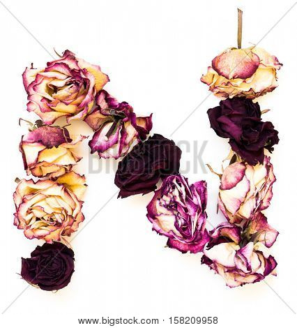 Rose dried Initials letter N.